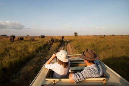 Wild-safaris